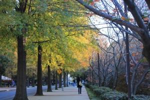 Fall at Georgia Tech